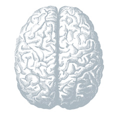 Image for Which Part of The Brain Does Your Content Engage?